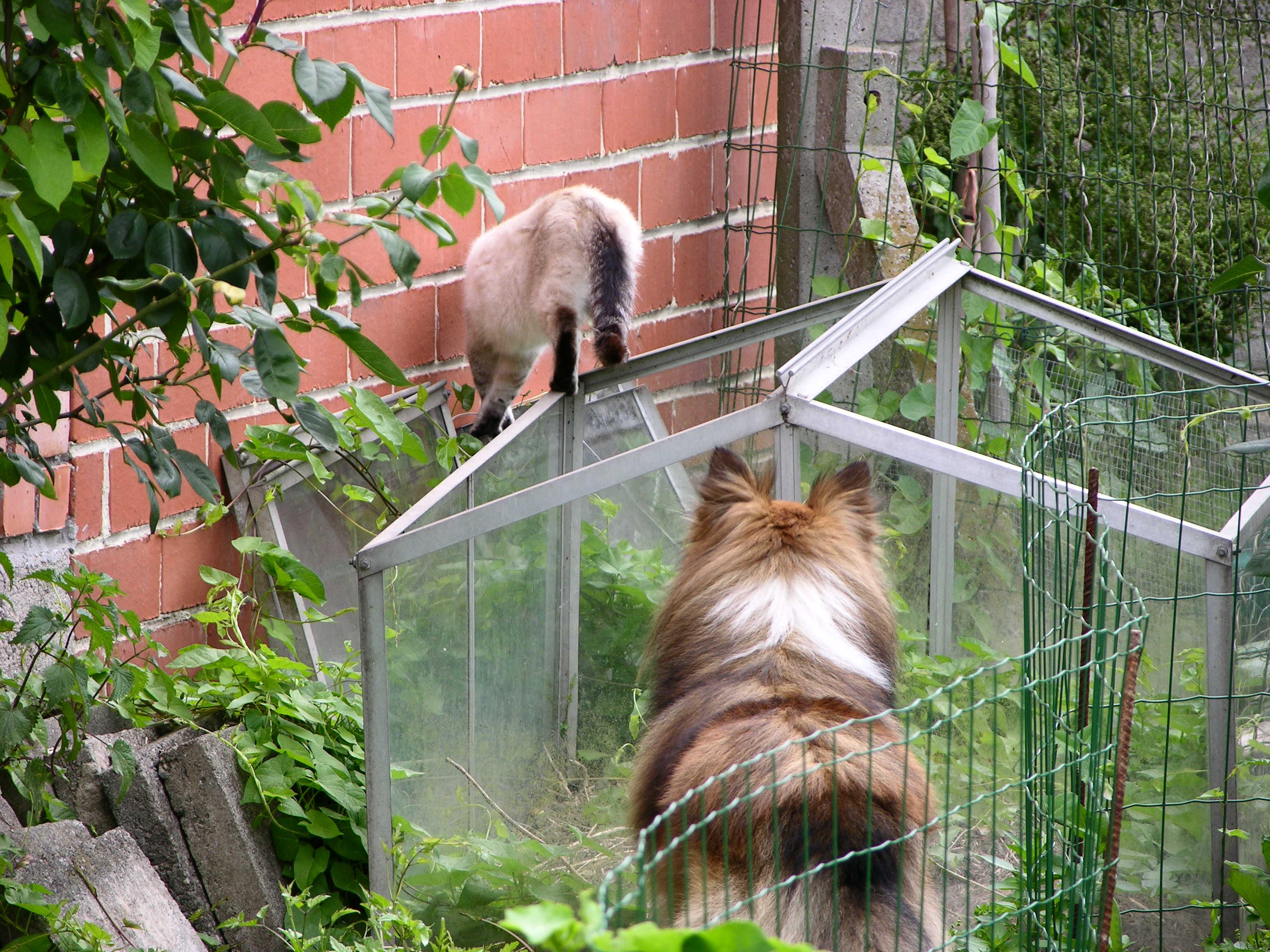 Les animaux du jardin notre petit jardin - Les animaux du jardin ...